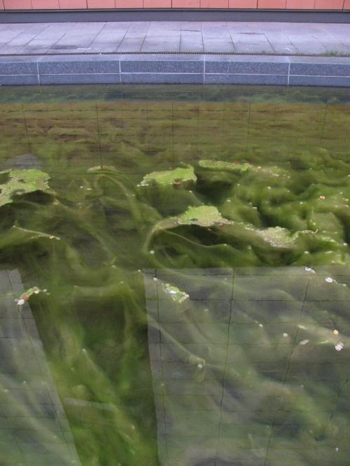 algen 1